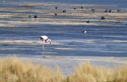 Flamingos em Laguna Santa Rosa