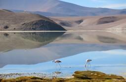 Flamingos na Laguna Santa Rosa, nosso segundo e terceiros dias de expedição - Foto de Alexandre Sanfugro