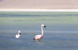 Flamingos na Laguna Santa Rosa, nosso segundo e terceiros dias de expedição - Foto de Gustavo Uria