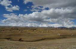 Mar de lhamas próximo a Pelechuco, Bolívia