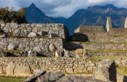 Machu_Picchu,_Perú,_2015-07-30,_DD_59
