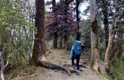 Floresta de Rododendros