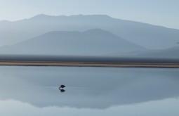 Flamingo na Laguna Santa Rosa, nosso segundo e terceiros dias de expedição 1 - Foto de Gustavo Uria