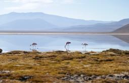 Flamingos na Laguna Santa Rosa, nosso segundo e terceiros dias de expedição - Foto de Emiliano Araujo