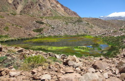 Vega-inundada-no-caminho-ao-Chile