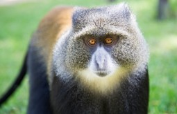 KILI - Macaco visto no primeiro dia do trekking - Foto Gabriel Tarso