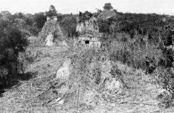 Tikal em 1882 em sua descoberta